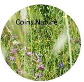B2 coin nature